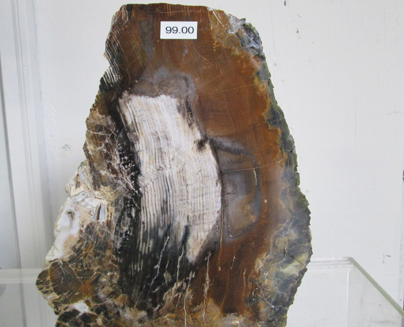 Petrified Wood Specimen     $99.99