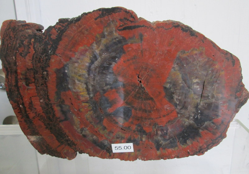 Arizona Petrified Wood  $55.00